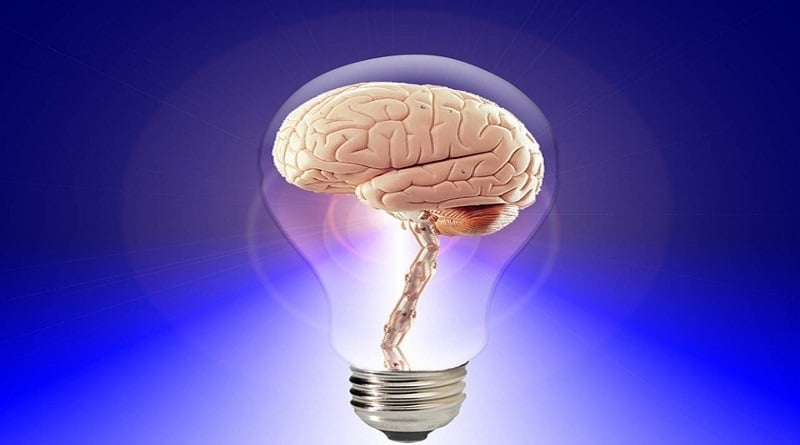 which part of the brain controls memory