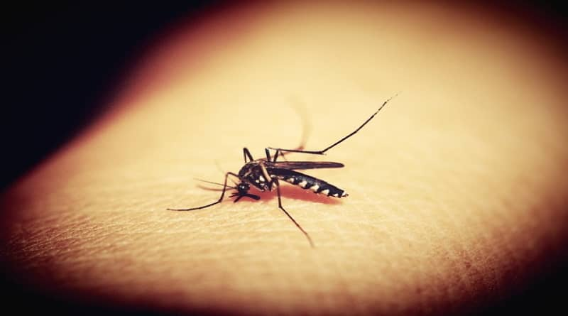 why do mosquitoes exist